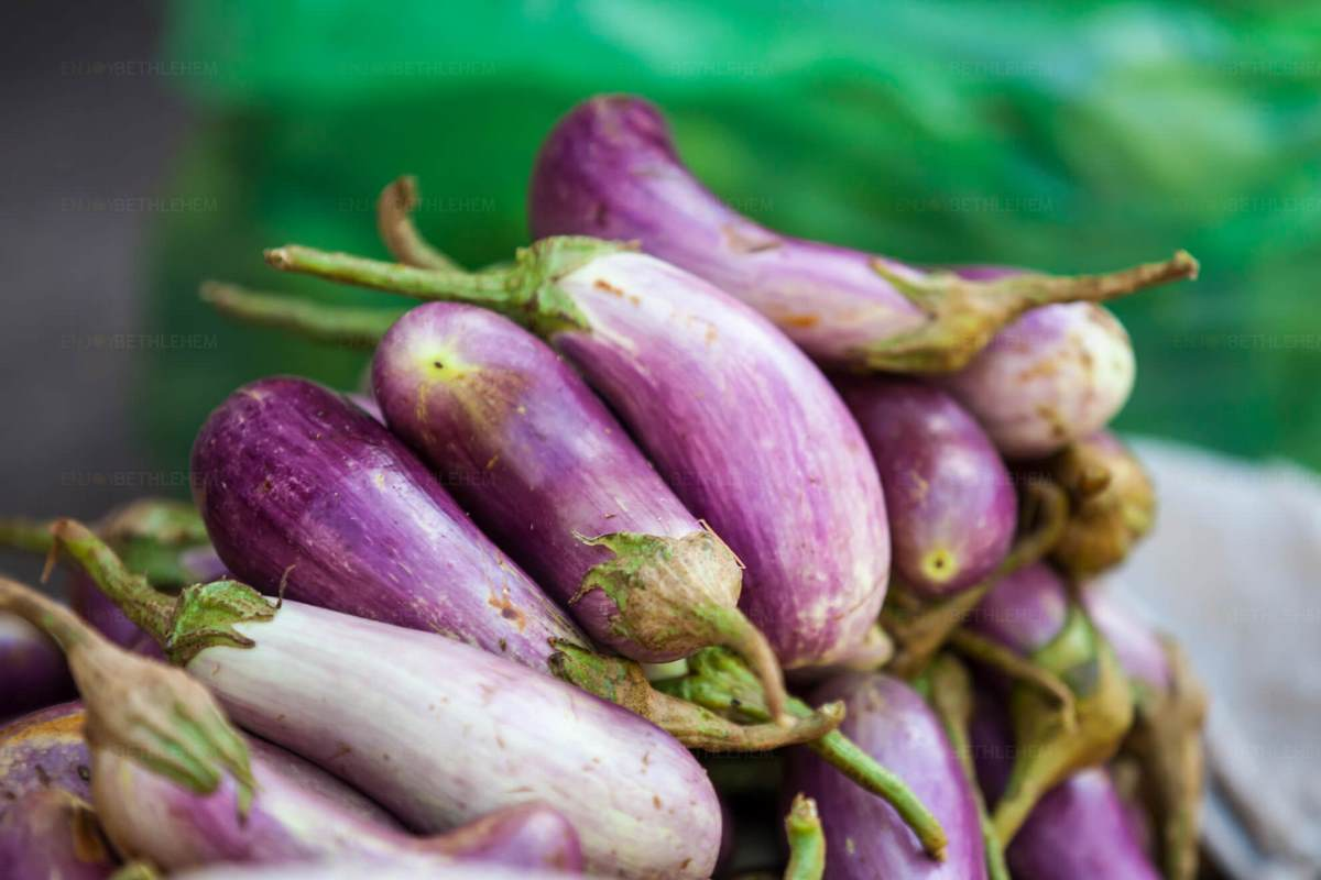 The Battir Eggplant Festival